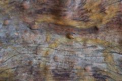 Die Oberfläche ist alter lebender Baum, mit Adern und Sprüngen, eine hellbraune Farbe mit gelben Stellen Stockfotos