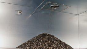 Die OberteilSonnenblumensamen in einem Haufen fransen aus Bunker mit Sonnenblumenöl-Produktionsabfall stock video footage