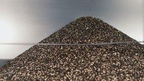 Die OberteilSonnenblumensamen in einem Haufen fransen aus Der Abfall in der Produktion des Sonnenblumenöl- und Samensäuberns stock footage