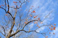 Die Obstbäume Stockfoto