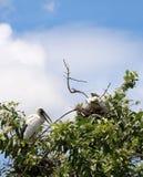 Die offene berechnete Storchvogelstange im Nest an der Spitze des Baums auf blauem Himmel und weißem Wolkenhintergrund stockfotografie