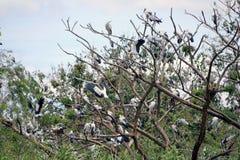 Die offene berechnete Storchvogelstange im Nest und auf der Niederlassung des Baums lizenzfreies stockfoto