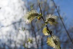 Die offene Blumenweide Stockfotos