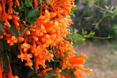 Die orange Trompete lizenzfreie stockfotografie