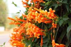 Die orange Trompete lizenzfreie stockfotos