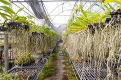 Die Orchideeluftwurzel Stockfotografie