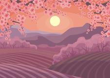 Die orientalische Kirschblüten Stockbild