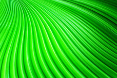 Die Palmblätter Stockbild