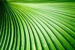 Die Palmblätter Lizenzfreie Stockfotos
