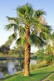 Die Palme Stockbild