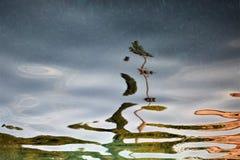Die Palme reflektiert sich vom Meer lizenzfreies stockbild