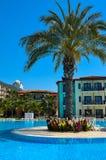 Die Palme und das Blumenbeet nahe dem blauen Pool, Gypsophilia-Hotel, Alania, die Türkei Stockfotografie
