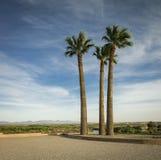 Die Palmen lizenzfreies stockfoto