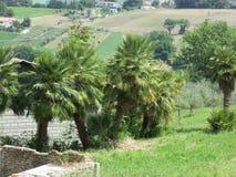 Die Palmen lizenzfreie stockbilder