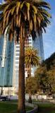 Die Palmen in der Stadt stockbilder