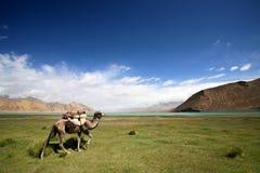 Die Pamir-Hochebene Stockfotografie