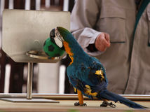 Die Papageienshow Stockfotografie