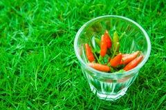 Die Paprikapfeffer am frischsten und am heißesten, an Hand und Rasen Stockbilder