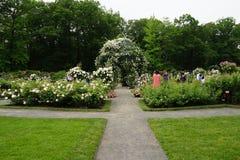 Die Peggy Rockefeller Rose Garden 8 Lizenzfreie Stockbilder