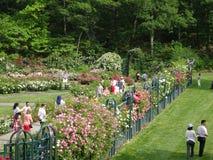 Die Peggy Rockefeller Rose Garden 9 Lizenzfreie Stockbilder