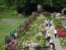 Die Peggy Rockefeller Rose Garden 14 Lizenzfreies Stockbild