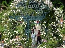 Die Peggy Rockefeller Rose Garden 16 Lizenzfreie Stockfotos