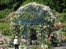 Die Peggy Rockefeller Rose Garden 18 Lizenzfreie Stockbilder