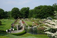 Die Peggy Rockefeller Rose Garden 22 Stockfotos
