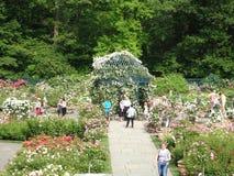 Die Peggy Rockefeller Rose Garden 36 Stockbilder
