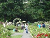 Die Peggy Rockefeller Rose Garden 41 Lizenzfreie Stockfotografie