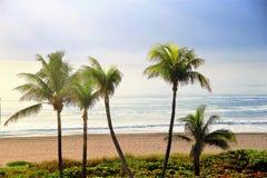 Die perfekte Strandansicht mit Palmen Lizenzfreie Stockfotos