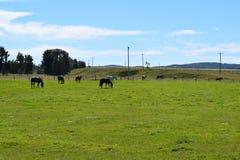 Die Pferde Lizenzfreie Stockfotos