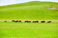 Die Pferde auf der grünen Wiese Stockfoto