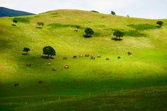 Die Pferde auf der grünen Wiese Lizenzfreie Stockfotos