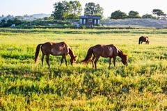 Die Pferde auf der Wiese Lizenzfreies Stockbild