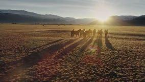 Die Pferde, die frei in Wiese mit Schnee laufen, bedeckten Gebirgshintergrund mit einer Kappe stock footage