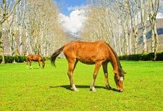 Die Pferde Stockbilder