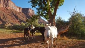 Die Pferde trockenen MESAs Lizenzfreies Stockfoto