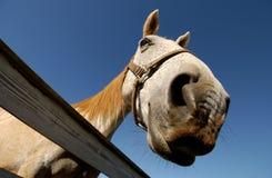 Die Pferden-Wekzeugspritze weiß Lizenzfreies Stockbild