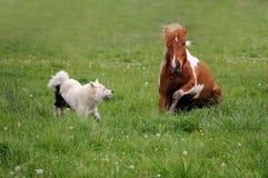 Die Pferdespiele mit Hund Lizenzfreie Stockfotos