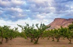 Die Pfirsich-Waldungen von Palisaden Colorado stockfotos