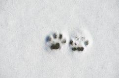 Die Pfotenabdrücke des Hundes auf Schnee lizenzfreie stockbilder