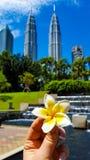 die Plumeriablume in der Hand auf dem Hintergrund von Wolkenkratzern und von Park Lizenzfreies Stockfoto