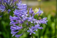 Die populärste Blumenfarbe Stockfotografie
