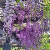 Die purpurrote Blume Lizenzfreie Stockbilder