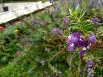 Die purpurrote Blume Stockfoto
