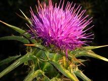 Die purpurrote Blume Lizenzfreie Stockfotografie