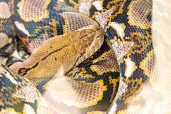Die Pythonschlange im Zoo lizenzfreies stockfoto