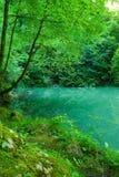 Die Quelle des Flusses Kupa im Wald Lizenzfreies Stockbild