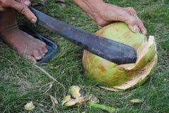 Die Raspel und die Kokosnuss Lizenzfreies Stockbild